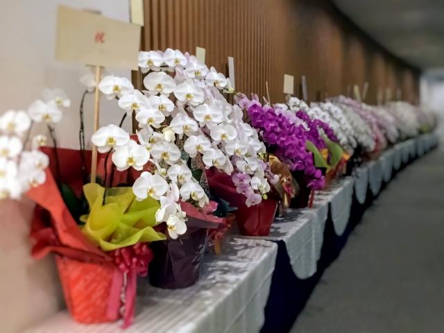 胡蝶蘭は開店、開業祝にぴったり